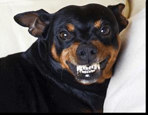 Defensive Fearful Dog